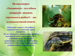 Некоторые думают, что рыбки и черепахи могут ужиться в одном аквариуме. Но, н