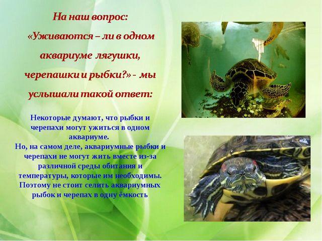 Некоторые думают, что рыбки и черепахи могут ужиться в одном аквариуме. Но, н...