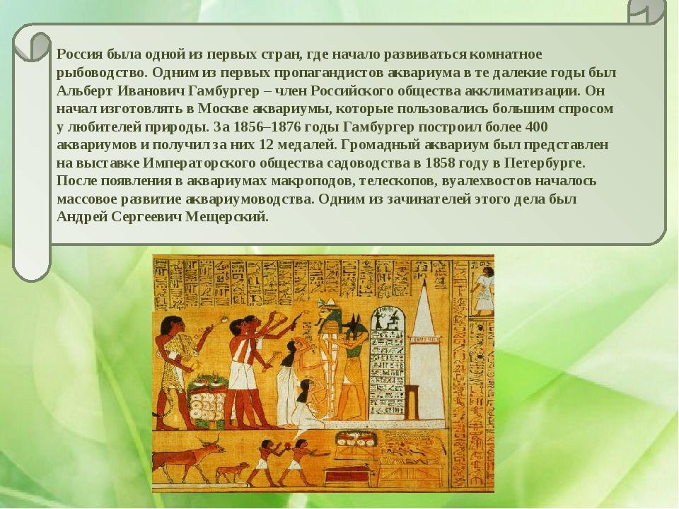 Россия была одной из первых стран, где начало развиваться комнатное рыбоводст...