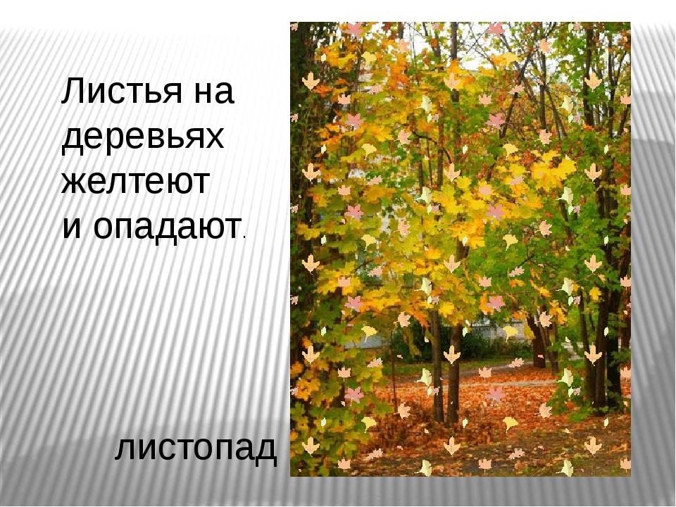 Листья на деревьях желтеют и опадают. листопад