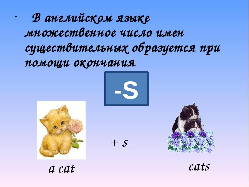 В английском языке множественное число имен существительных образуется при п...