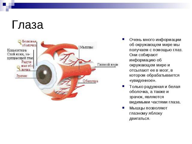 Глаза Очень много информации об окружающем мире мы получаем с помощью глаз. О...