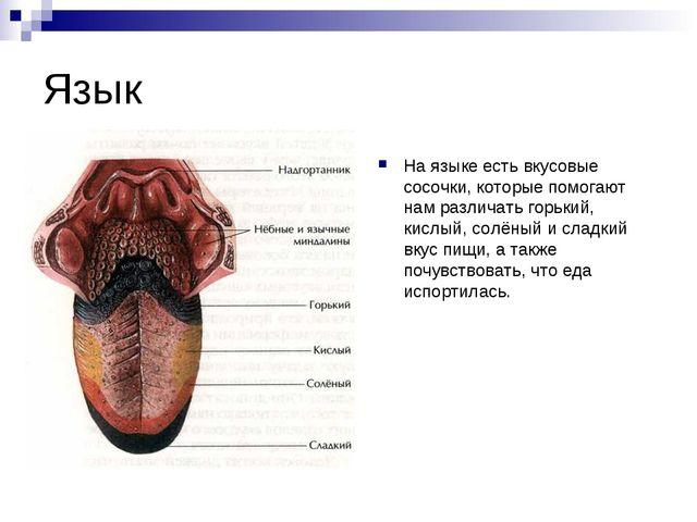 Язык На языке есть вкусовые сосочки, которые помогают нам различать горький,...