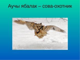 Аучы ябалак – сова-охотник