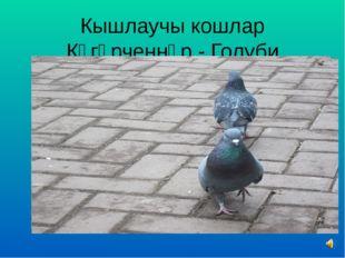 Кышлаучы кошлар Күгәрченнәр - Голуби