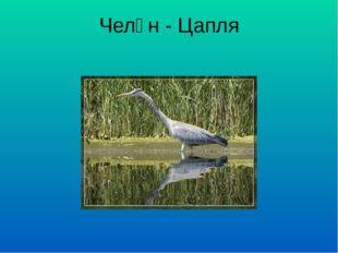 Челән - Цапля
