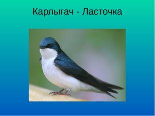 Карлыгач - Ласточка