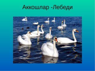 Аккошлар -Лебеди