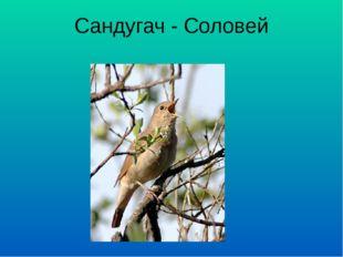 Сандугач - Соловей