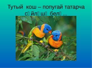 Тутый кош – попугай татарча сөйләшә белә...