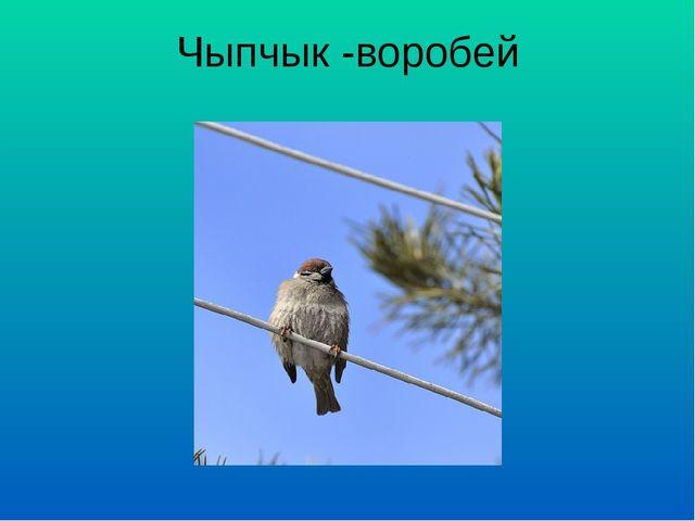 Чыпчык -воробей