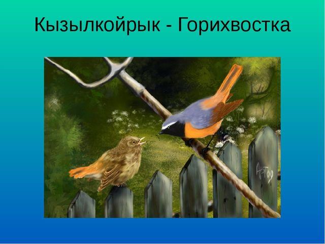 Кызылкойрык - Горихвостка