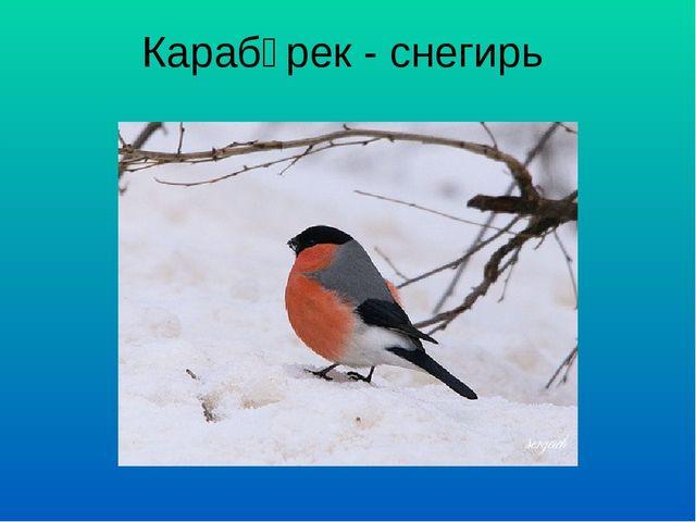 Карабүрек - снегирь