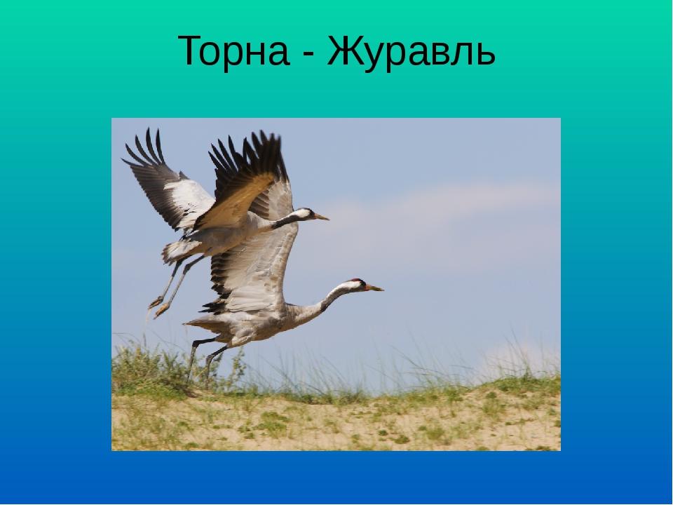 Торна - Журавль