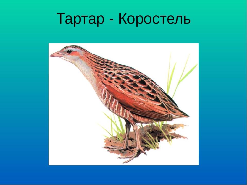 Тартар - Коростель