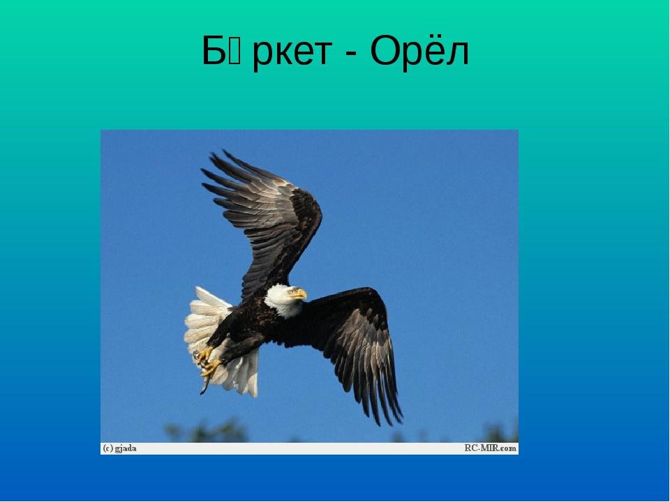 Бөркет - Орёл