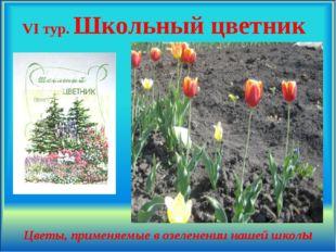 VI тур. Школьный цветник Цветы, применяемые в озеленении нашей школы .