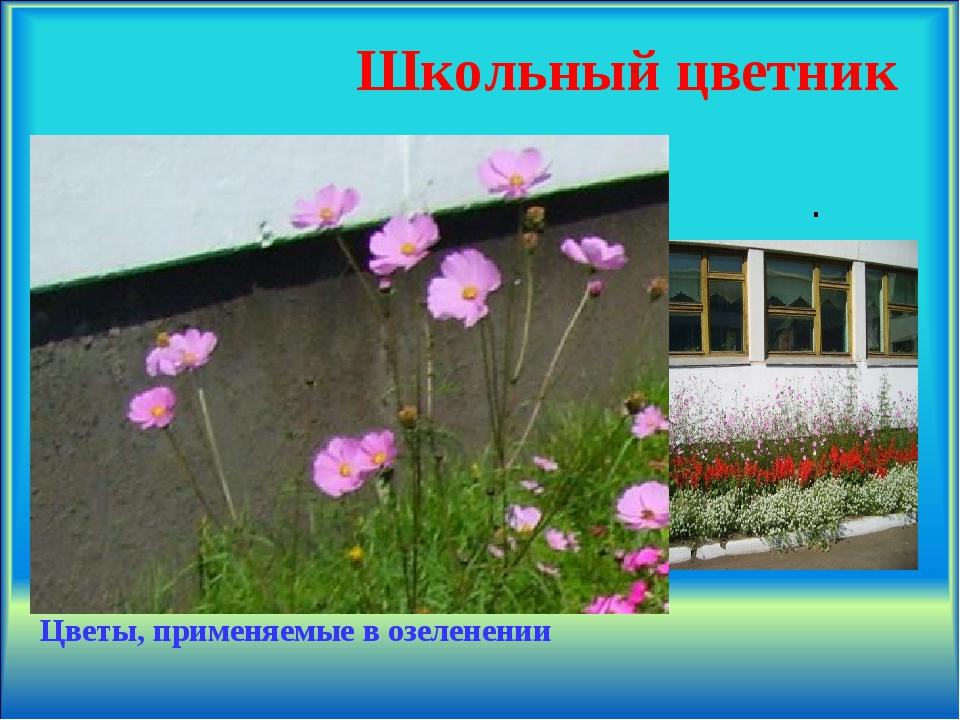 Школьный цветник Цветы, применяемые в озеленении .