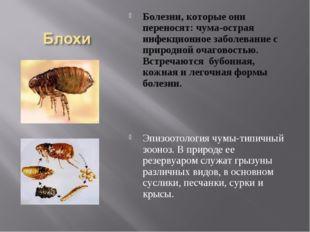 Болезни, которые они переносят: чума-острая инфекционное заболевание с природ