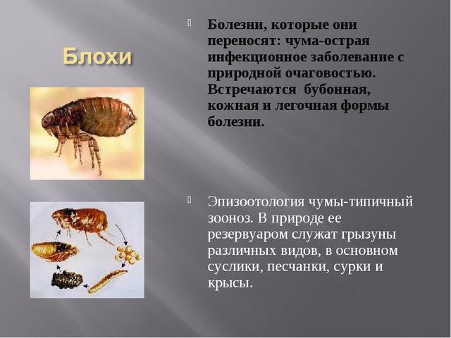 Болезни, которые они переносят: чума-острая инфекционное заболевание с природ...