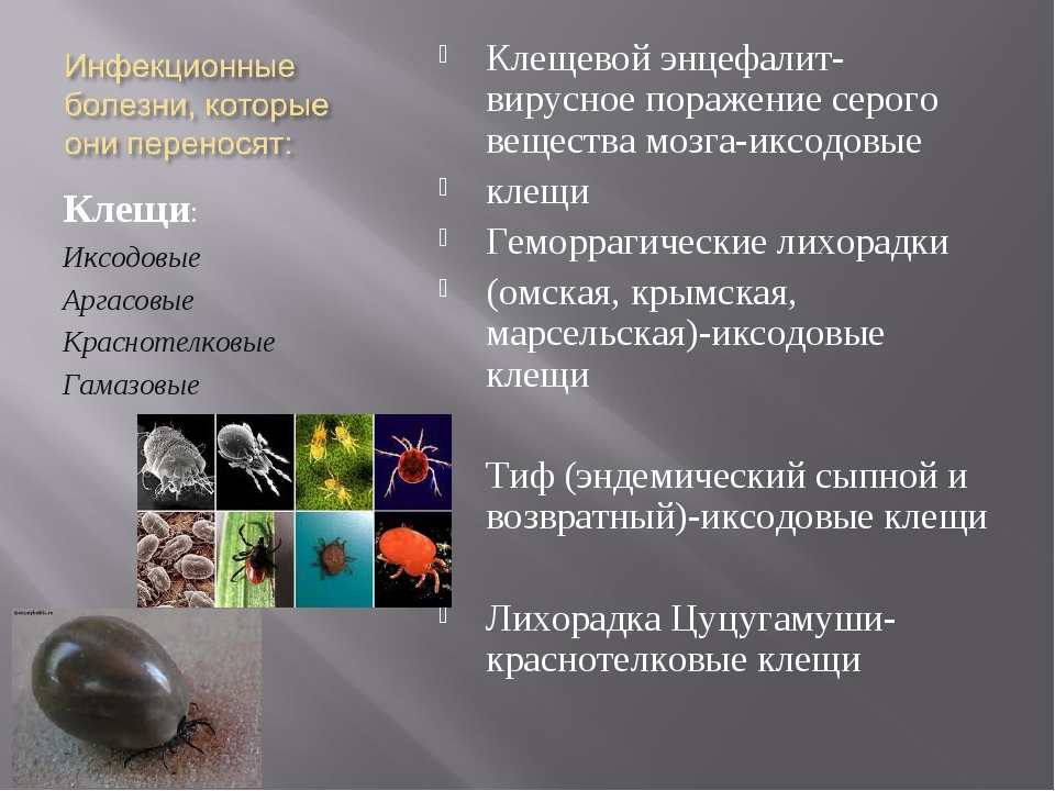Клещи: Иксодовые Аргасовые Краснотелковые Гамазовые Клещевой энцефалит-вирусн...
