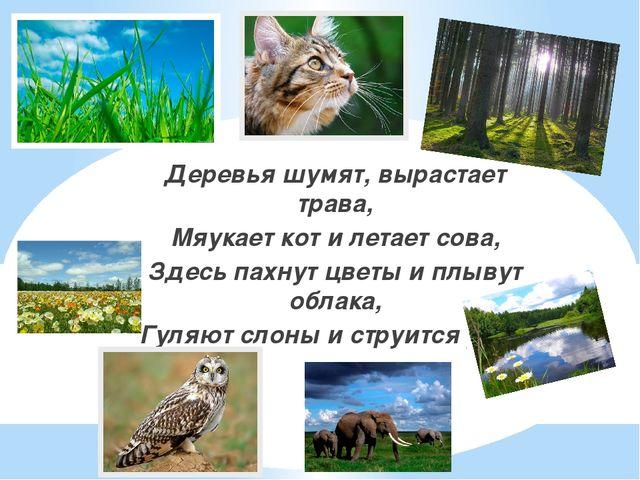 Деревья шумят, вырастает трава, Мяукает кот и летает сова, Здесь пахнут цветы...