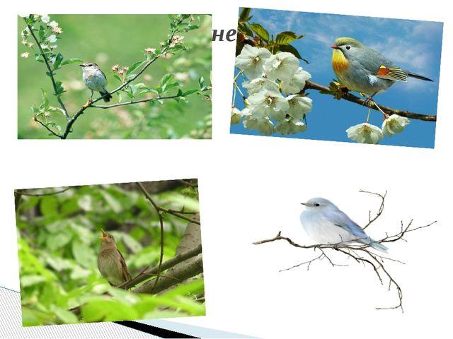 В лесу не молкнет птичий гам,