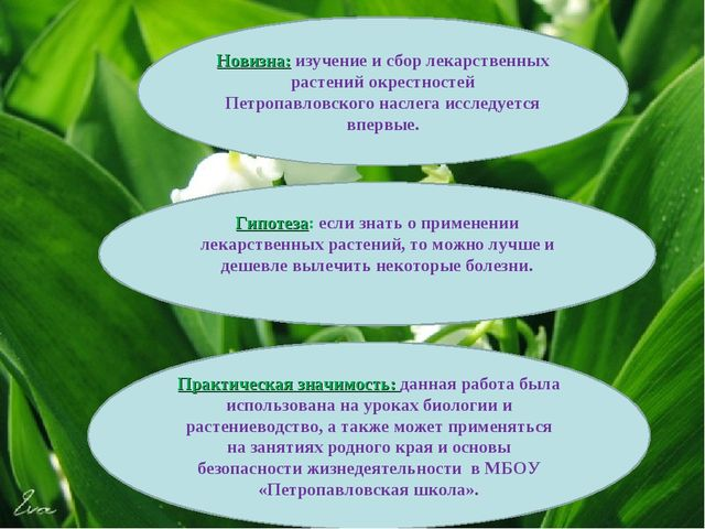 Новизна: изучение и сбор лекарственных растений окрестностей Петропавловског...