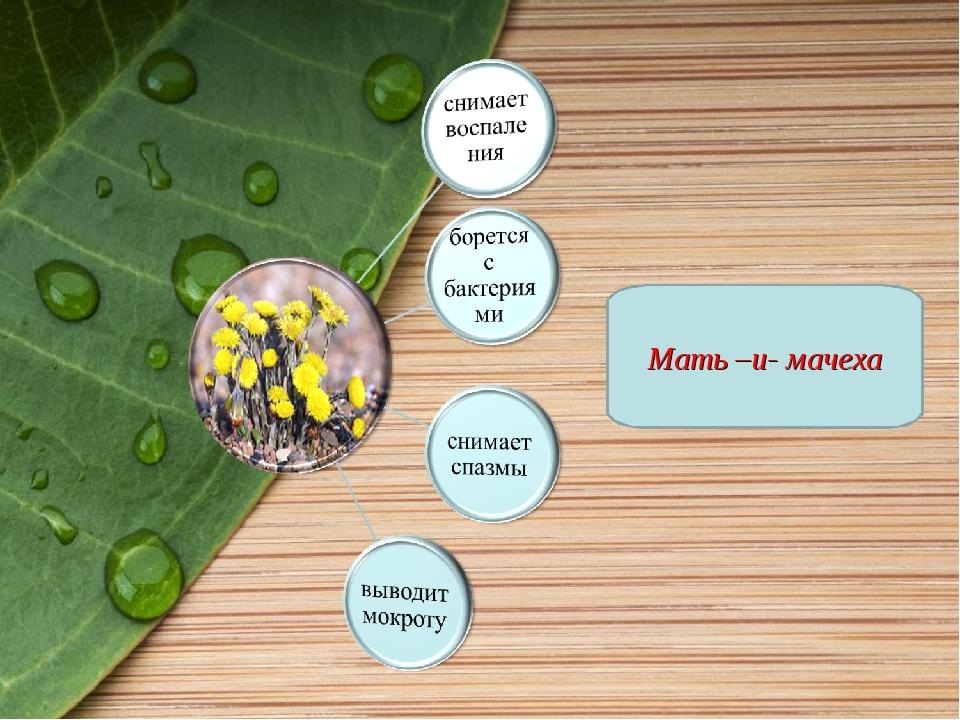 Мать –и- мачеха