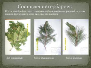 Итогом нашей работы стало составление гербариев собранных растений, на основе