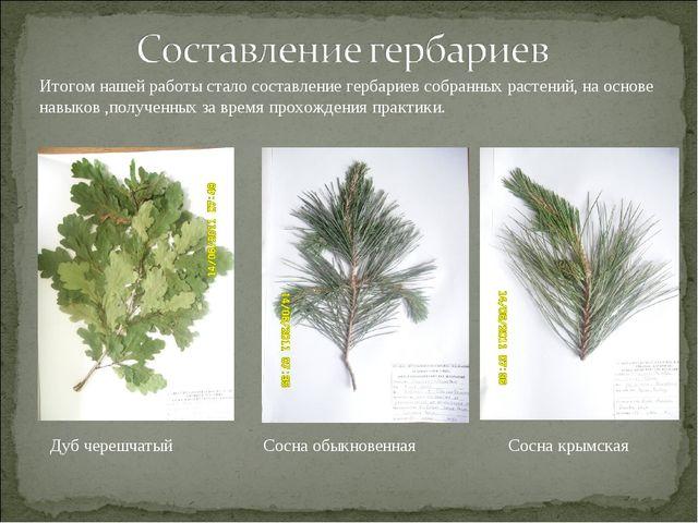 Итогом нашей работы стало составление гербариев собранных растений, на основе...