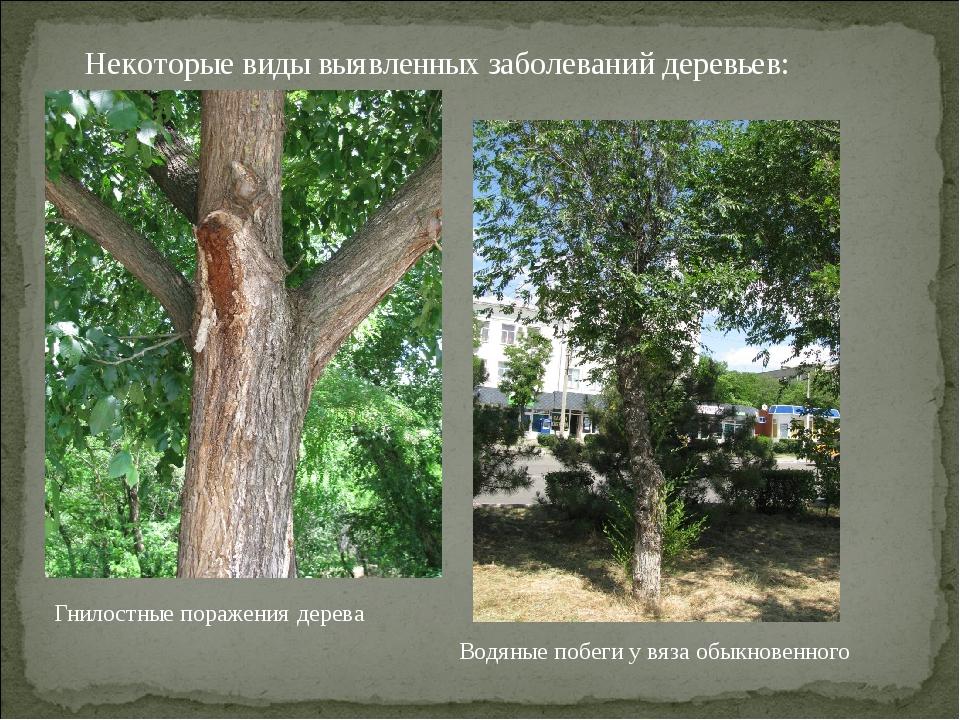 Некоторые виды выявленных заболеваний деревьев: Водяные побеги у вяза обыкнов...