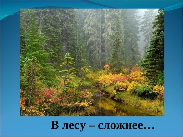 В лесу – сложнее…