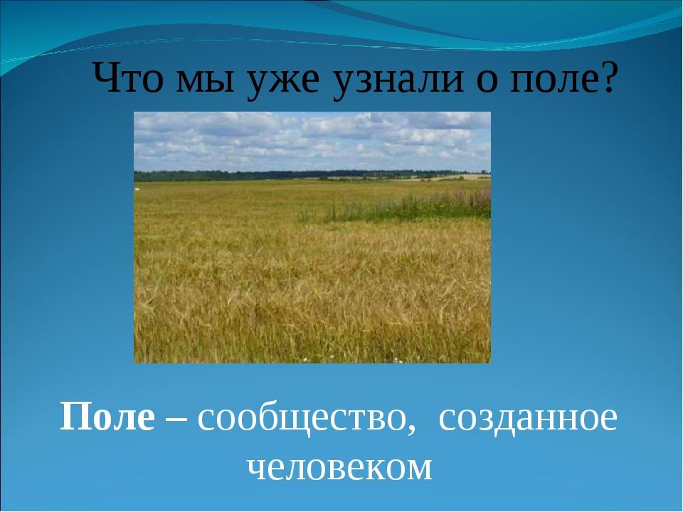 Что мы уже узнали о поле? Поле – сообщество, созданное человеком