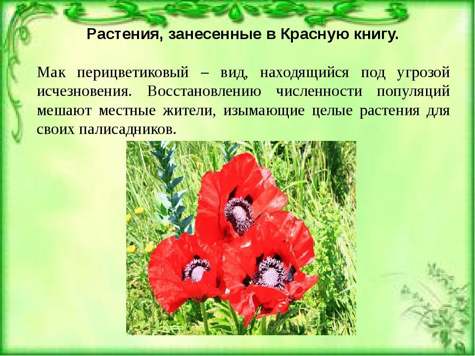 Почему заносят растения в красную книгу