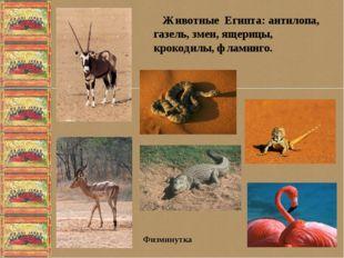 Животные Египта: антилопа, газель, змеи, ящерицы, крокодилы, фламинго. Физми
