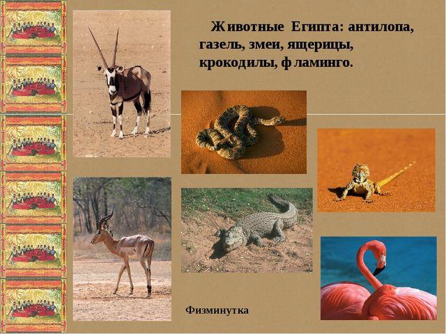 Животные Египта: антилопа, газель, змеи, ящерицы, крокодилы, фламинго. Физми...