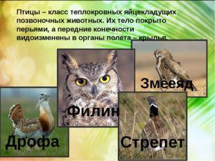 Птицы – класс теплокровных яйцекладущих позвоночных животных. Их тело покрыт