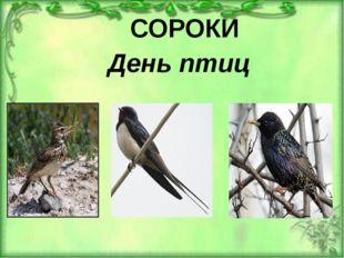 СОРОКИ День птиц