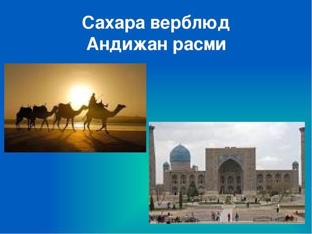 Сахара верблюд Андижан расми