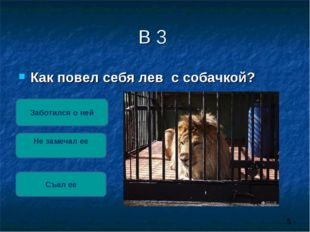В 3 Как повел себя лев с собачкой? Заботился о ней Не замечал ее Съел ее Съел