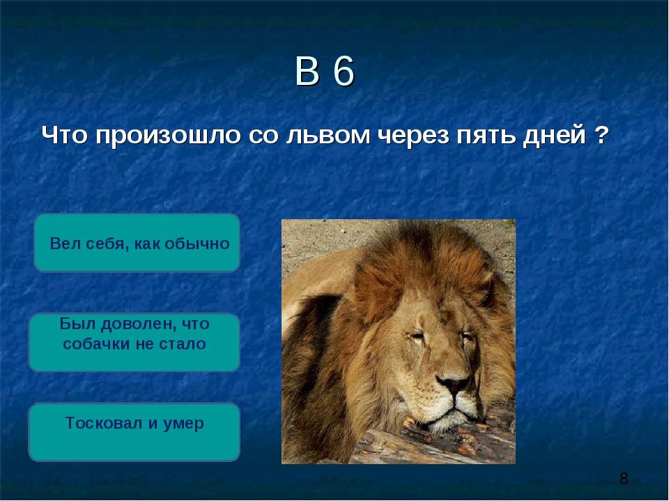 В 6 Что произошло со львом через пять дней ? Тосковал и умер Был доволен, что...