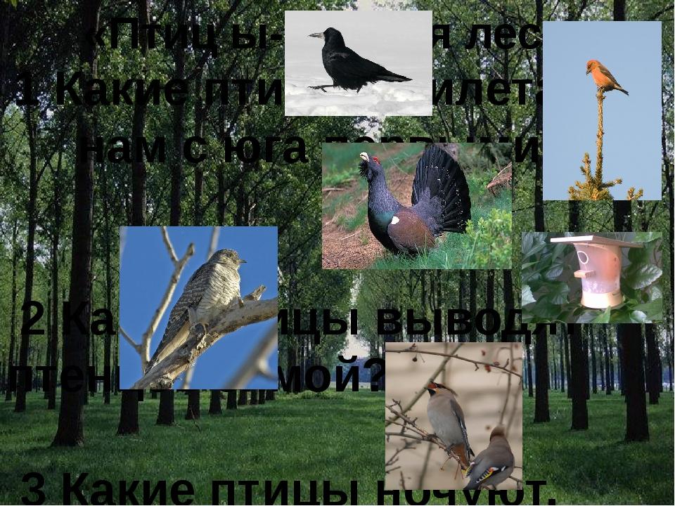 «Птиц ы- друзья леса» 1 Какие птицы прилетают к нам с юга первыми? 2 Какие п...