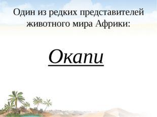 Один из редких представителей животного мира Африки: Окапи