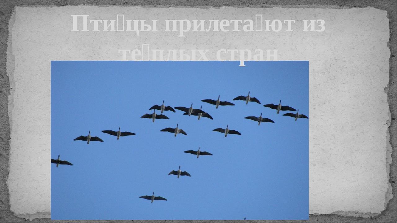 Пти́цы прилета́ют из те́плых стран