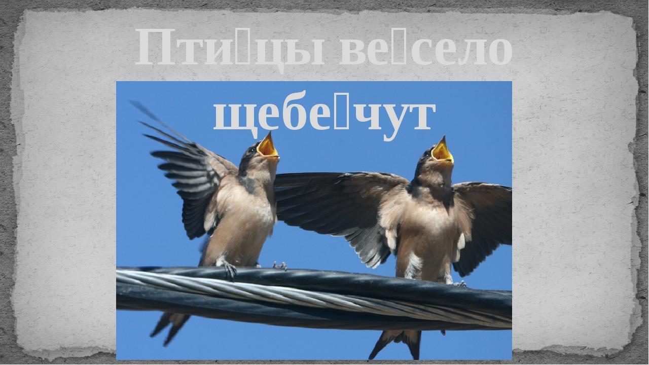 Пти́цы ве́село щебе́чут