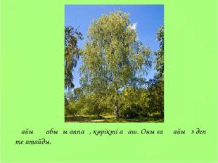 Қайың қабығы аппақ, көрікті ағаш. Оны «аққайың» деп те атайды.