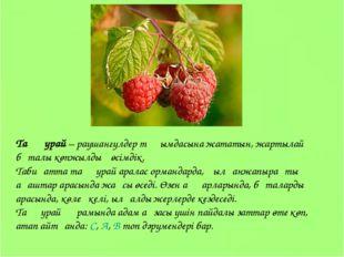 Таңқурай – раушангүлдер тұқымдасына жататын, жартылай бұталы көпжылдық өсімді