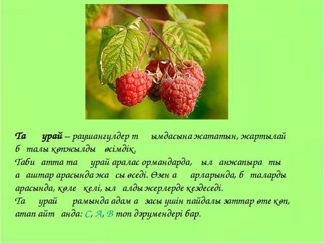 Таңқурай – раушангүлдер тұқымдасына жататын, жартылай бұталы көпжылдық өсімді...