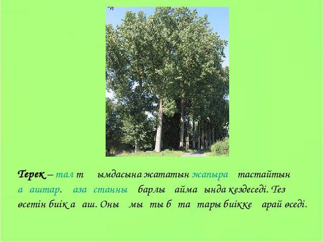 Терек – тал тұқымдасына жататын жапырақ тастайтын ағаштар. Қазақстанның барлы...